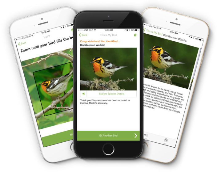 Building a bird recognition app and large scale dataset with citizen